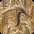 Image of ergot disease on wheat