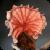 Crinipellis perniciosa mushroom