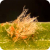 Picture of Pyrenophora tritici-repentis
