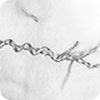 Coiling of Trichoderma hyphae around Rhizoctonia.